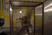 Качественный террариум из сетки для хамелеона,  змей